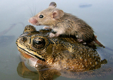 060705-mouse-frog_big
